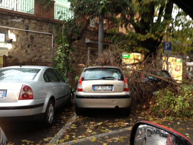 Read more about the article Montesacro, alberi su case ed automobili a causa del maltempo