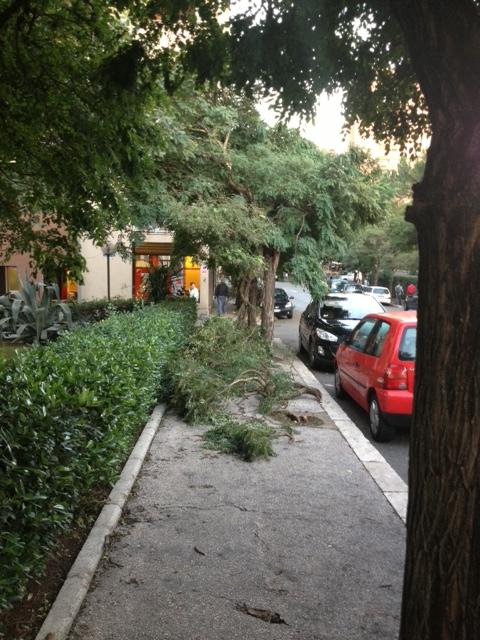 Read more about the article Colle Salario, rami in mezzo ai marciapiedi sotto casa dell'assessore